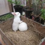 bunnies_11