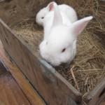 bunnies_12