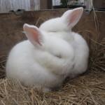 bunnies_13
