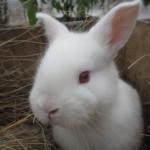 bunnies_2