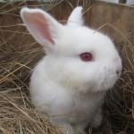 bunnies_3