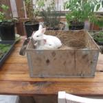 bunnies_9